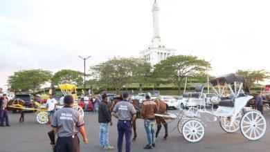 Photo of Rescatan caballos maltratados en área monumental de Santiago