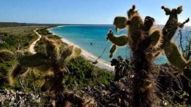 Photo of Tribunal anula títulos de terrenos en Bahía de las Águilas y los devuelve al Estado