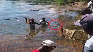 Photo of Vieron algo extraño flotando en el agua y cuando entraron había un cadáver