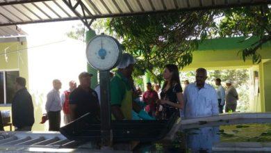 Photo of Reina Letizia visita a productora de banano que le extendió invitación