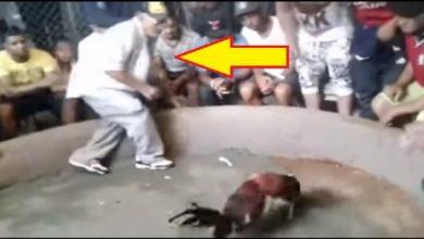 Photo of Vídeo: Fallece de infarto en plena pelea de gallos