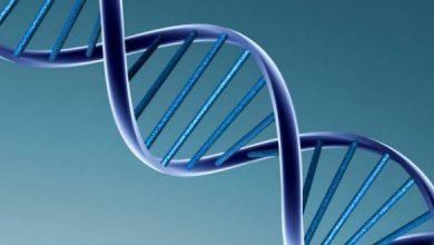 Photo of Científicos descubren que una molécula puede alargar la vida hasta 5 años