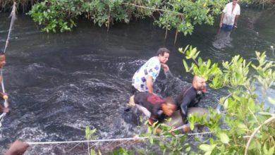 Photo of Rescatan manatí en una cañada en Puerto Plata