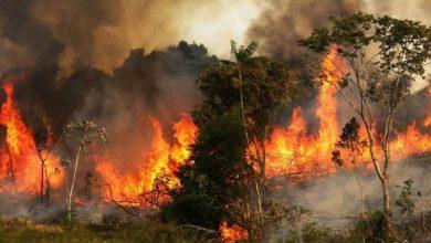 Photo of La Amazonía está en llamas y Bolsonaro insinúa que la culpa es de las ONG