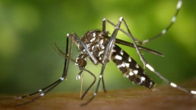 Photo of Dengue: 17 muertes y 9,793 casos hasta ahora en el país