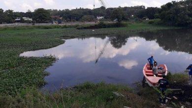 Photo of Pescadores anuncian operativo para eliminar las lilas de ríos Ozama e Isabela
