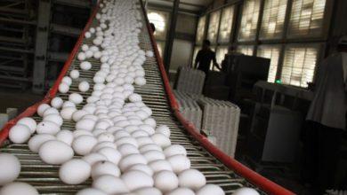 Photo of República Dominicana produce 400 millones de huevos más que años atrás