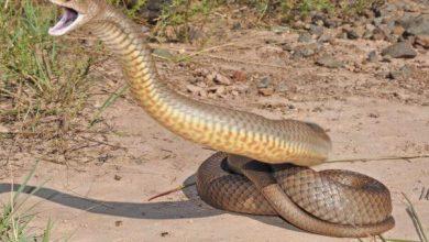 Photo of El coronavirus podría tener su origen en comer serpientes, según virólogos