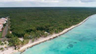 Photo of Terrenos Globalia habían sido certificados área protegida