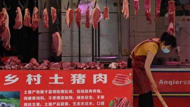 Photo of Wuhan confirma la prohibición de venta y consumo de animales salvajes
