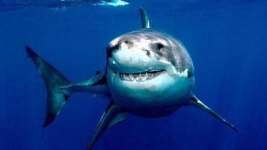 Photo of Un surfista sobrevive a puñetazos al ataque de un tiburón en Australia
