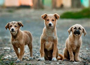 Photo of Día Internacional del Animal sin Hogar