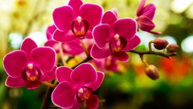 Photo of Ministerio de Educación licita compra de orquídeas por casi RD$700 mil