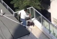 Photo of Arturo Nanita dice atacó a la perrita Trufa para defender a su hijo