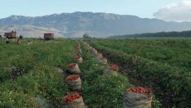 Photo of Las plagas reducen la capacidad productiva del sector agrícola