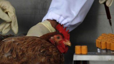 Photo of China registra el primer caso mundial de gripe aviar H10N3 en humanos